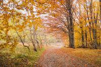 Есенна палитра; comments:4