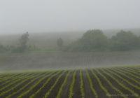 Мъгливи поля; comments:15