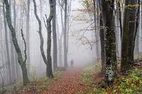 Разходка в мъглата; comments:10