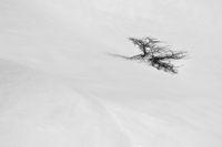 зимна импресия; comments:13
