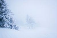 Изгубени в снежната пустош; comments:6