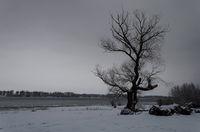 На брега на р. Дунав; comments:6