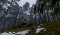 Тайнствената гора; comments:6