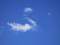 Небесен лебед; Коментари:4