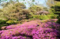 Japanese garden; Коментари:1