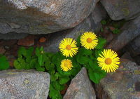 no name ( ID=2044425 ); comments:8
