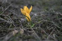 Подранила пролет; comments:13