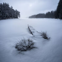 Зимни таралежи :); comments:17