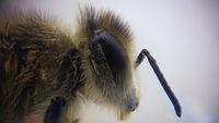 Пчела; comments:4