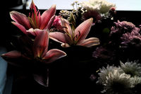 flowers in the shadow; Няма коментари