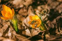 Силата на природата; comments:7