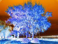 Есен в парка; comments:9