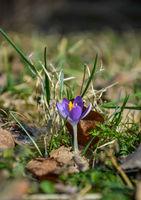 Пролетта наближава; Коментари:1