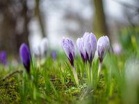 Пролетно; Коментари:4