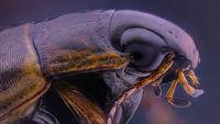 Beetle; comments:4