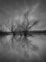 Дунавско огледало; comments:12