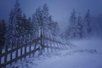 В бури и мъгли те устояват; comments:16