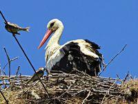 Отново в родното гнездо; comments:5