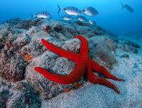 Морска звезда; comments:39