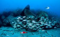 Подводен пейзаж; comments:13