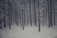 В тъмната гора...; comments:21