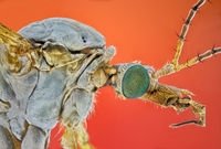 Crane Fly; comments:5