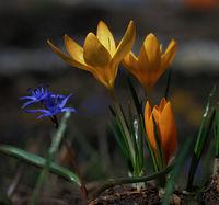 Пролет; comments:27