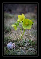 Пролетно; comments:8
