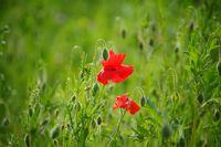 И този миг е твойй..Пролетно настроение!; comments:3