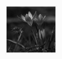 Пролет; comments:22