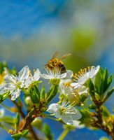 Пролетно; comments:9
