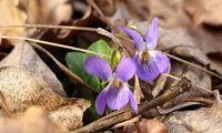 Пролет; Коментари:5