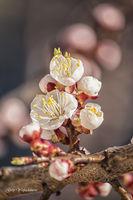 Пролет; comments:15