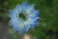 no name ( ID=2055272 ); comments:3