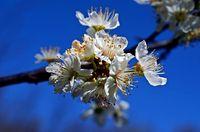 Пролетно; comments:19