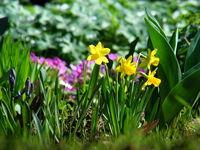 Пролет в градината...; comments:21