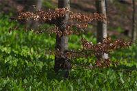 В гората!; comments:38