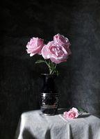 Рози; comments:20