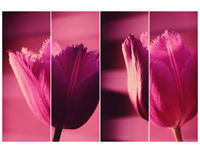Пролетни етюди; comments:26