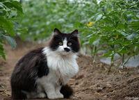 Farm Cat; comments:8