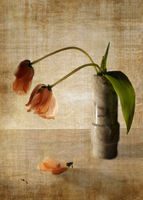 no name ( ID=2057974 ); comments:42