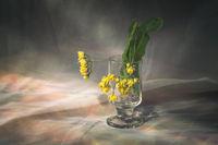 Linden flowers; comments:16