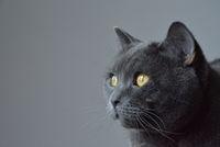 El gato зяпа...; comments:6
