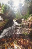 В гората; No comments