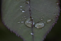 rain drops II; No comments
