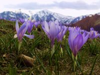 no name ( ID=2059145 ); comments:7