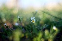 Пролетно; comments:3