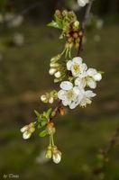 Пролетно; comments:2