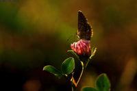 светлината и пеперудата; comments:16