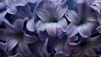 Пролетно ухание; comments:8